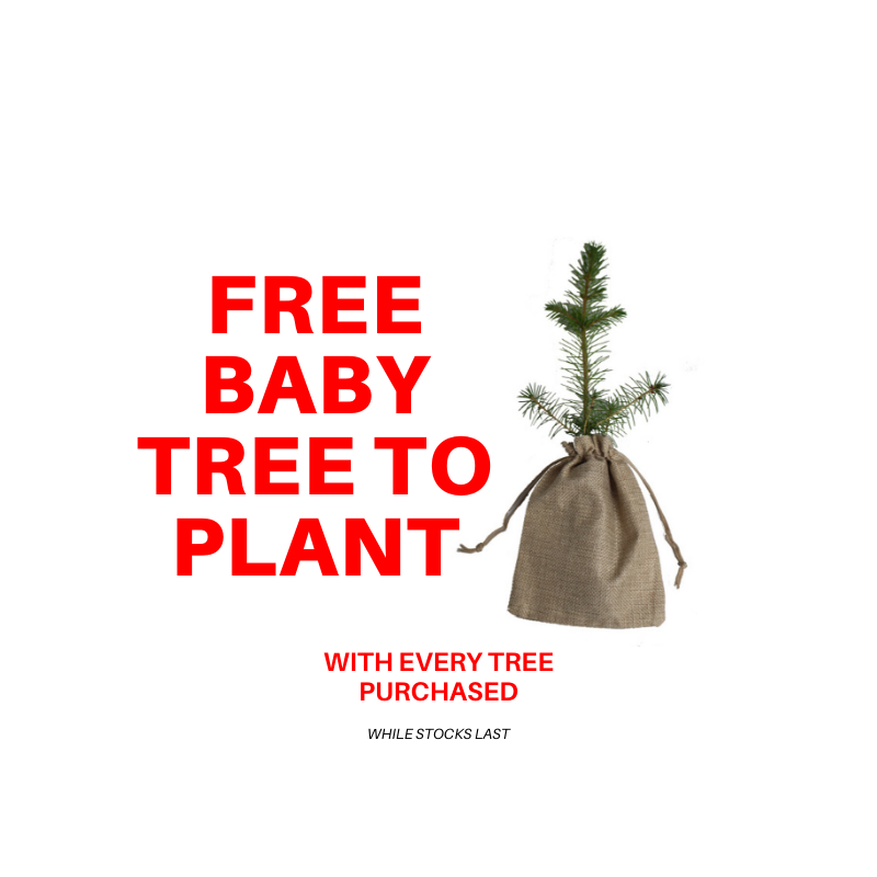 Trinity Street Christmas Trees - Free Baby Tree Offer