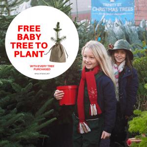 Trinity Street Baby Tree Offer