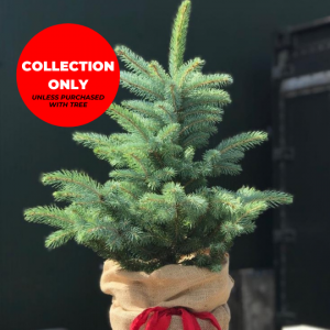 Trinity Street Christmas Trees - Blue Spruce Table Top Tree -